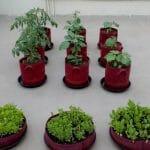 homecrop-balcony-garden-kit