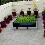 homecrop-terrace-garden-kit