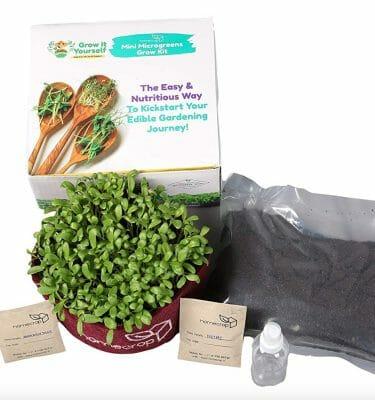 All-Inclusive Microgreens Kits | Grow Wheatgrass, Radish & More
